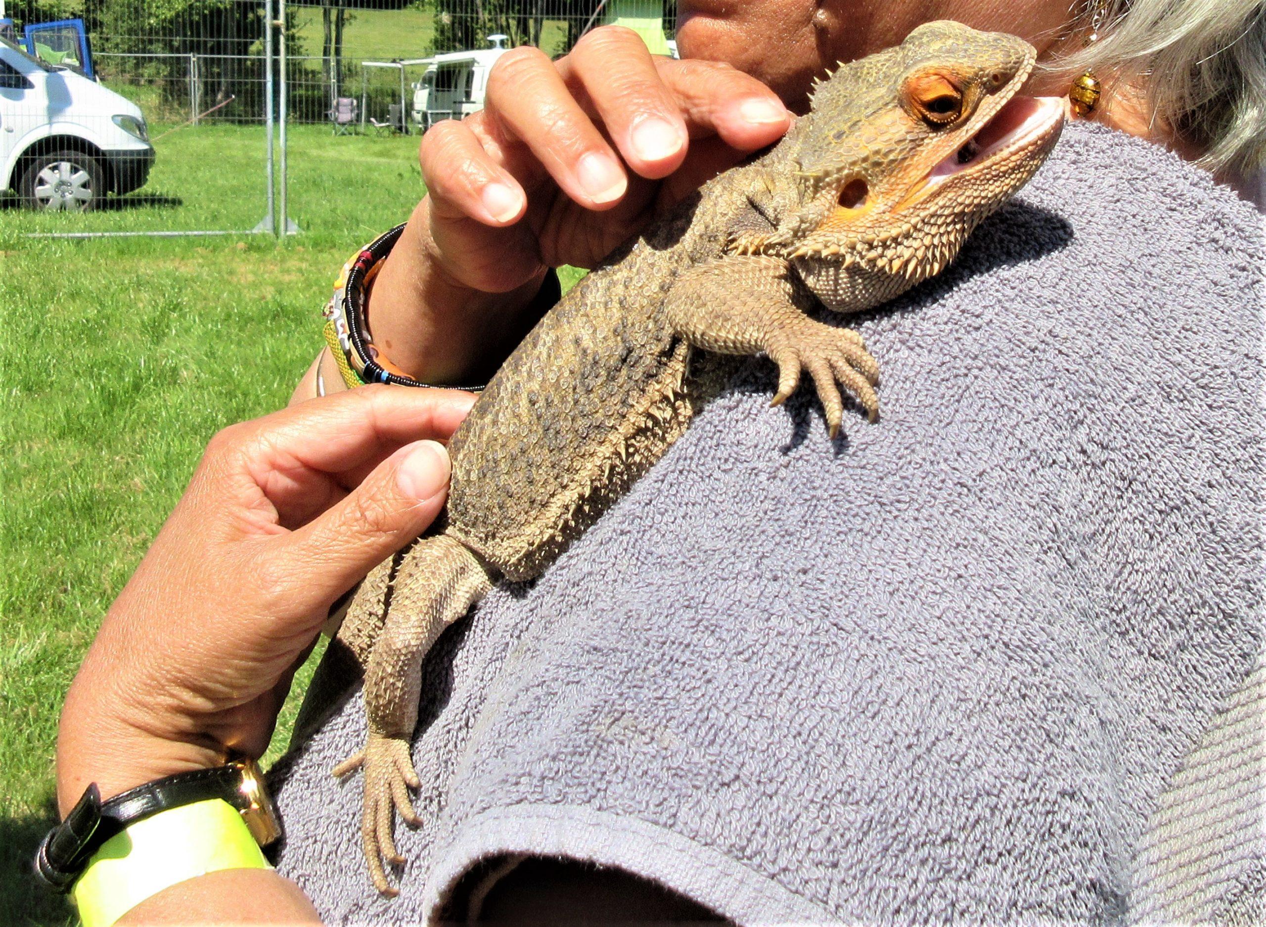 lizard on shoulder
